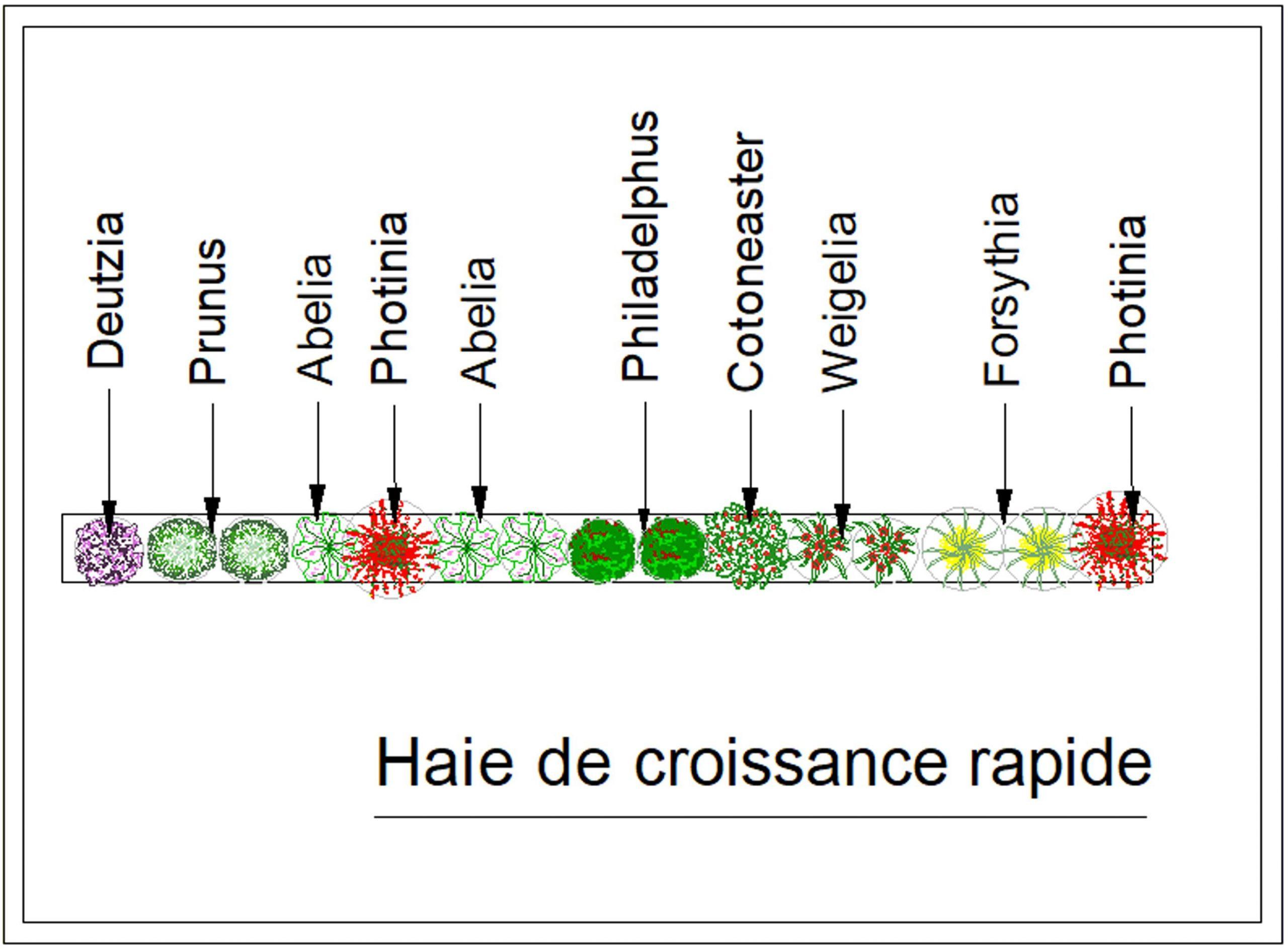 Haie Croissance Rapide | Croissance Rapide, Haie Feuillage ... à Haie De Jardin Pousse Rapide