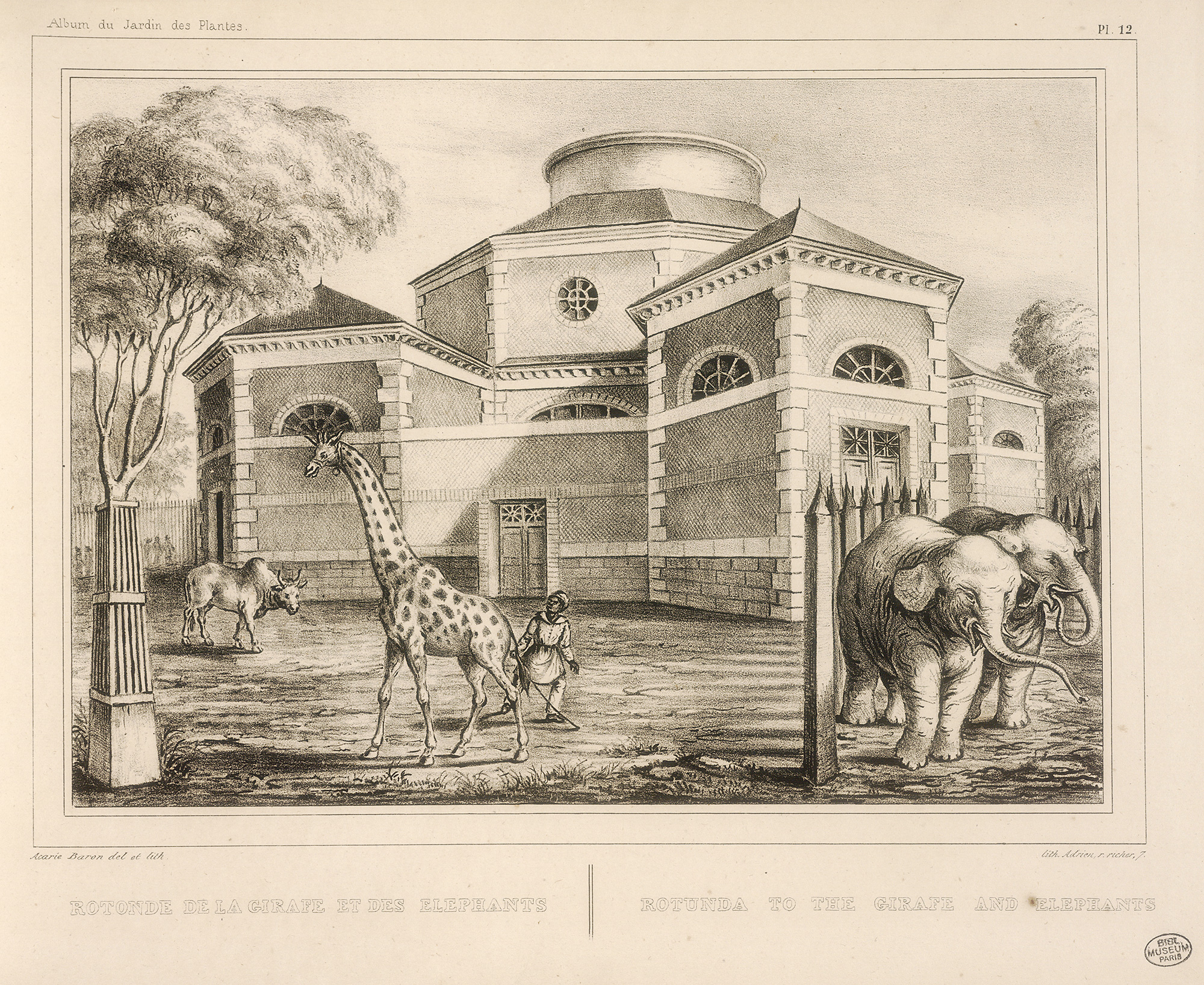History Of The Ménagerie, The Zoo Of The Jardin Des Plantes ... tout Serre De Jardin Amazon