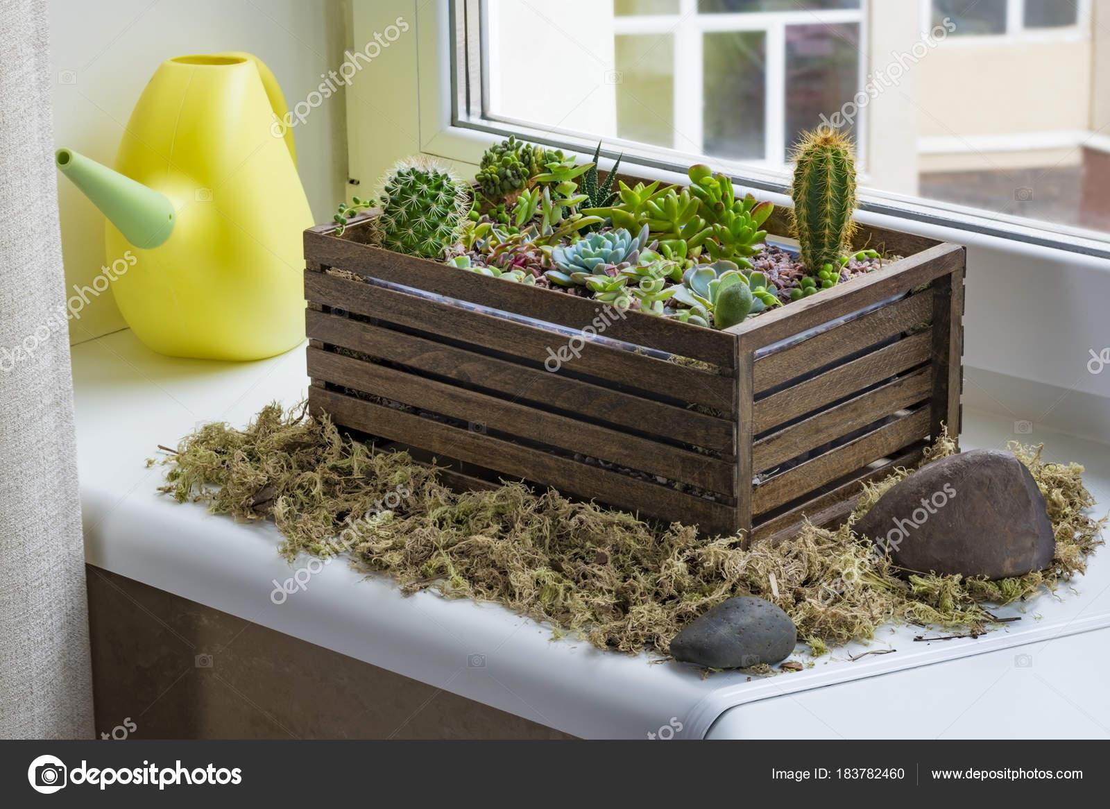 Home Mini Succulent Cactus Garden Arranged Dark Wooden Box ... à Jardin Cactus Miniature