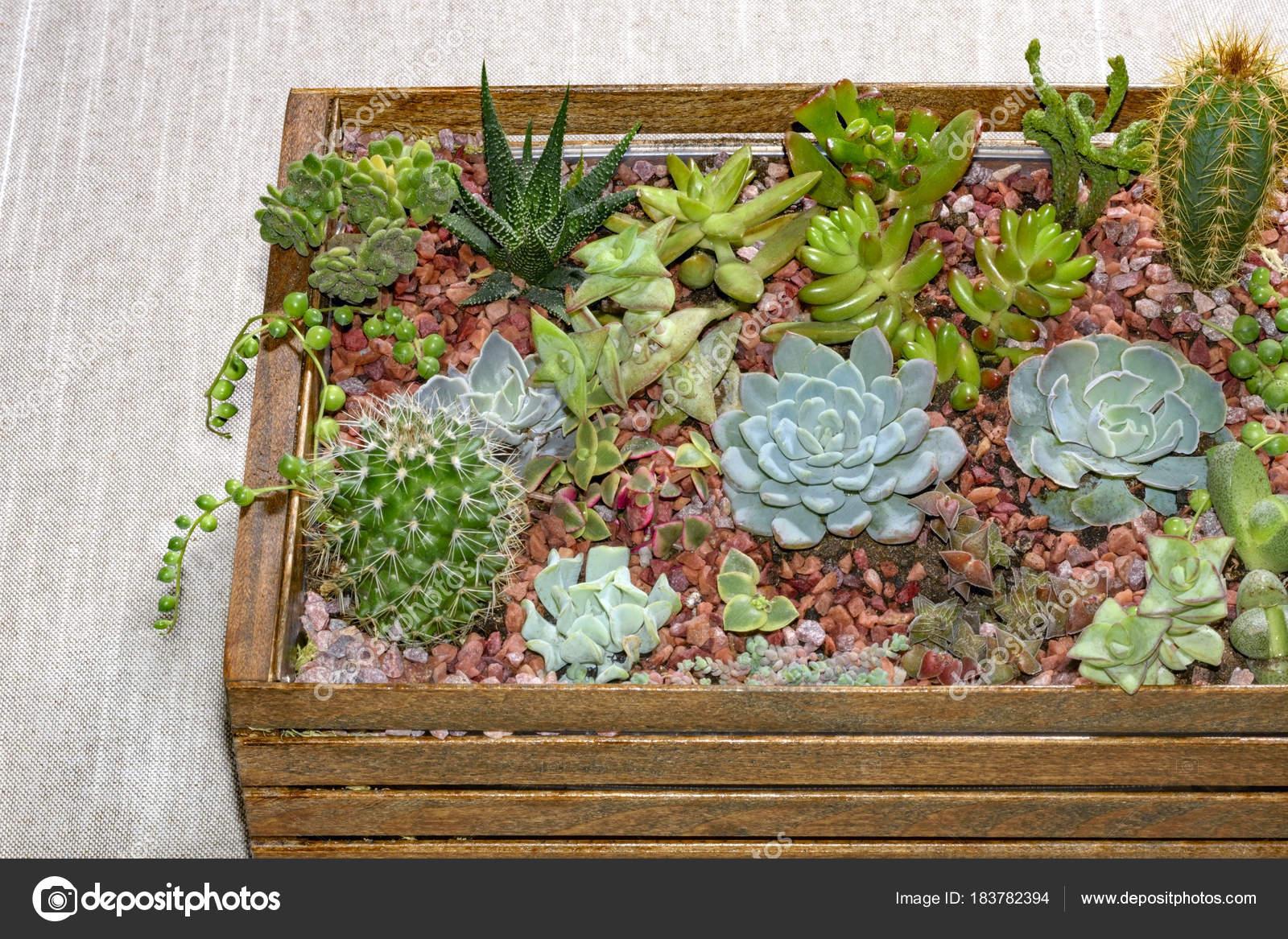 Home Mini Succulent Cactus Garden Arranged Dark Wooden Box ... concernant Jardin Cactus Miniature