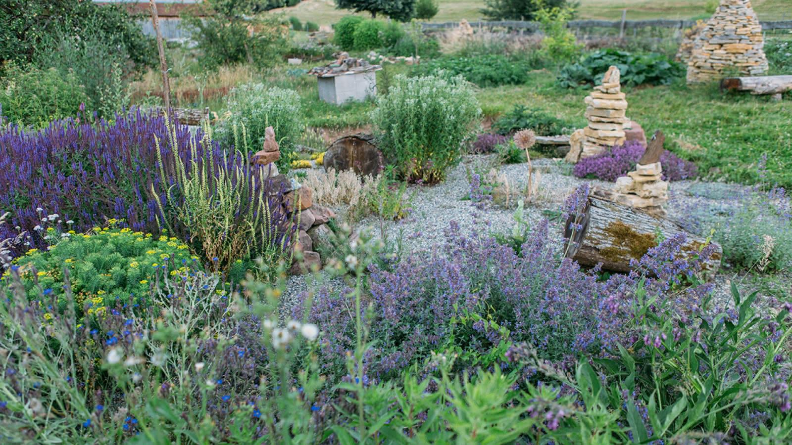 Hymenoptera, Le Jardin Écologique - Obersteinbach   Visit Alsace à Jardins Écologiques
