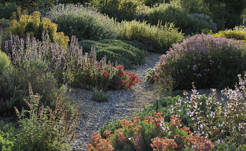 Idées Nature : Un Jardin Sans Eau, C'est Possible tout Idée De Génie Jardin
