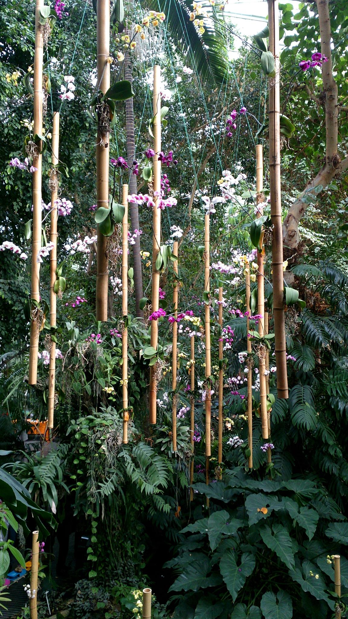 Image Du Jour : Exposition Des Orchidées À La Grande Serre ... pour Exposition Serre De Jardin
