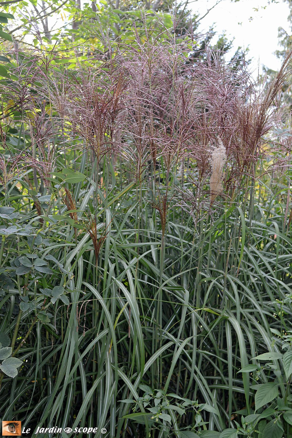 J'ai Testé Le Paillage De Miscanthus Dans Mon Jardin... - Le ... intérieur Copeaux De Bois Jardin Pas Cher