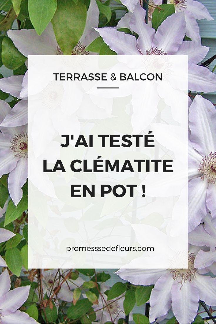 J'ai Testé Sur Mon Balcon : La Clématite En Pot | Clematite ... serapportantà Jardiner Pour Les Nuls