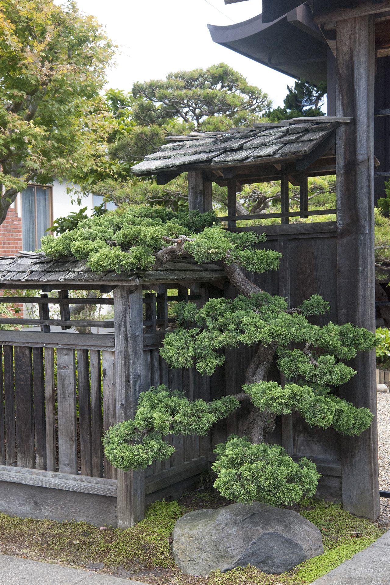 Japanese Pruning, Gate Tree | Petit Jardin Japonais ... à Petit Jardin Japonisant