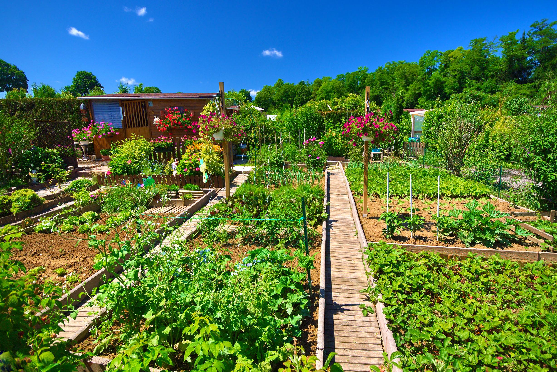 Jardin Bio : Optez Pour Des Engrais De Fond   La Maison Bio dedans La Potasse Au Jardin