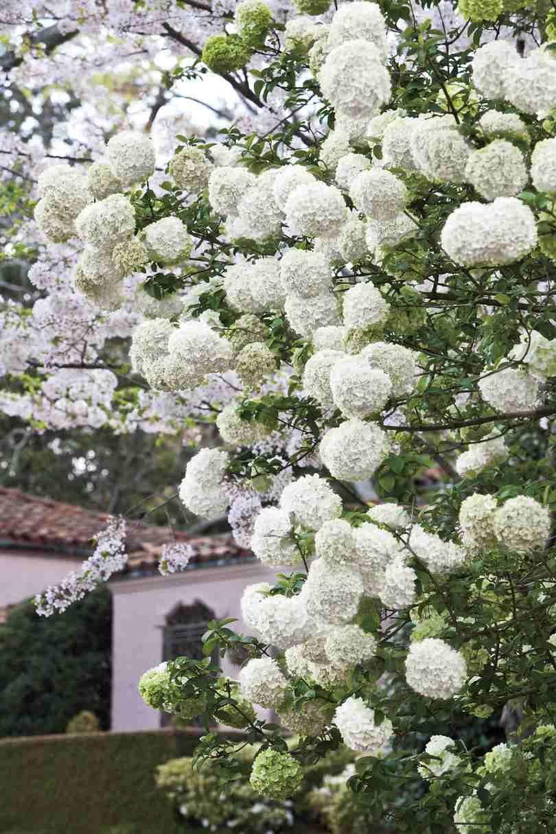 Jardin Blanc Moderne : Idées Et Conseils Pour Un Jardinet ... dedans Idee De Plantation Pour Jardin