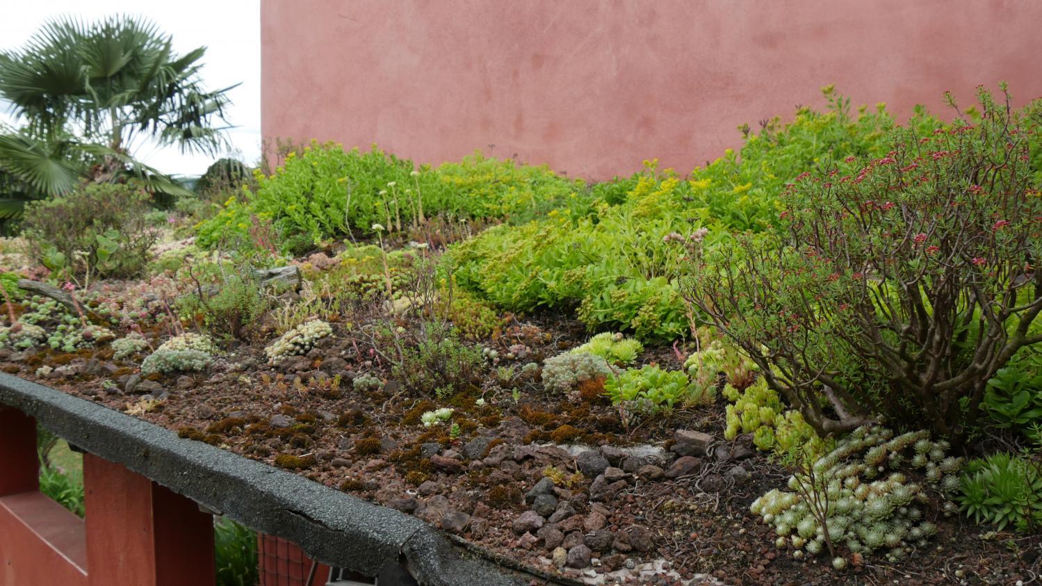 Jardin. Comment Végétaliser Le Toit De Votre Abri De Jardin serapportantà Plante Bassin De Jardin