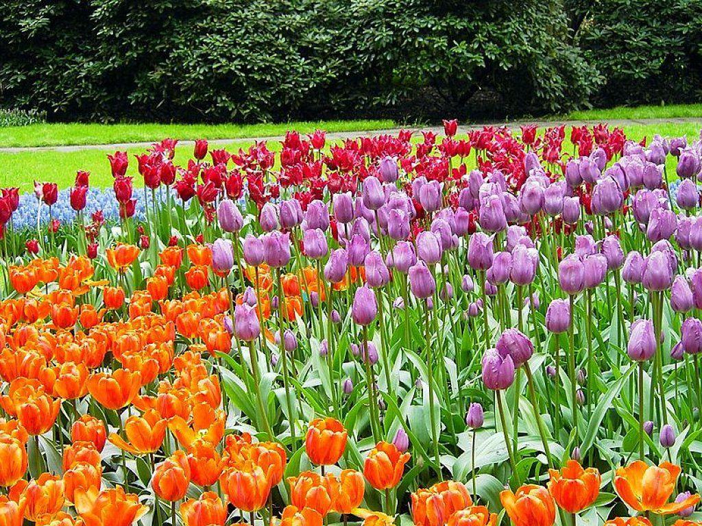 Jardín De Keukenhof | Cuidar De Tus Plantas Es Facilisimo ... concernant Jardin De Keukenhof