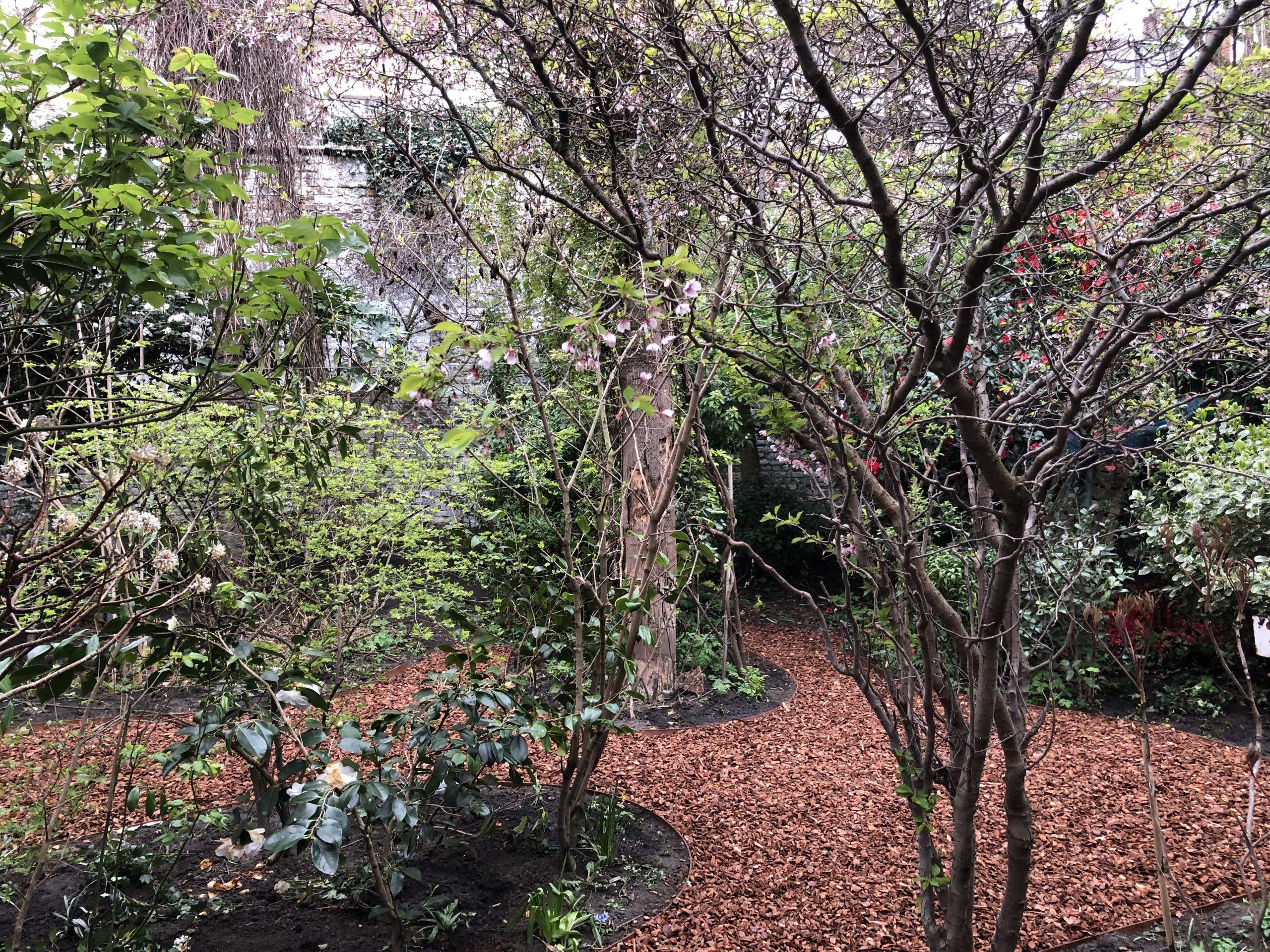 Jardin De Ville De 200M2 // Bruxelles - Schaerbeek ... à Copeaux De Bois Jardin