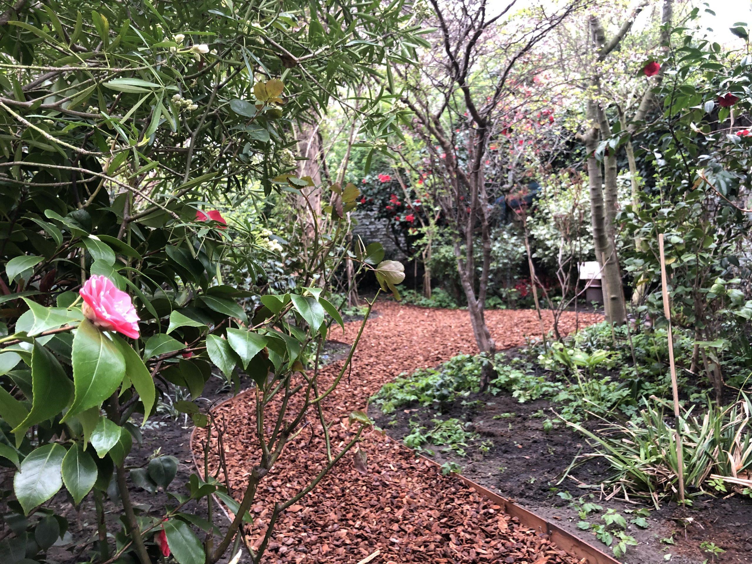 Jardin De Ville De 200M2 // Bruxelles - Schaerbeek ... dedans Copeaux De Bois Jardin