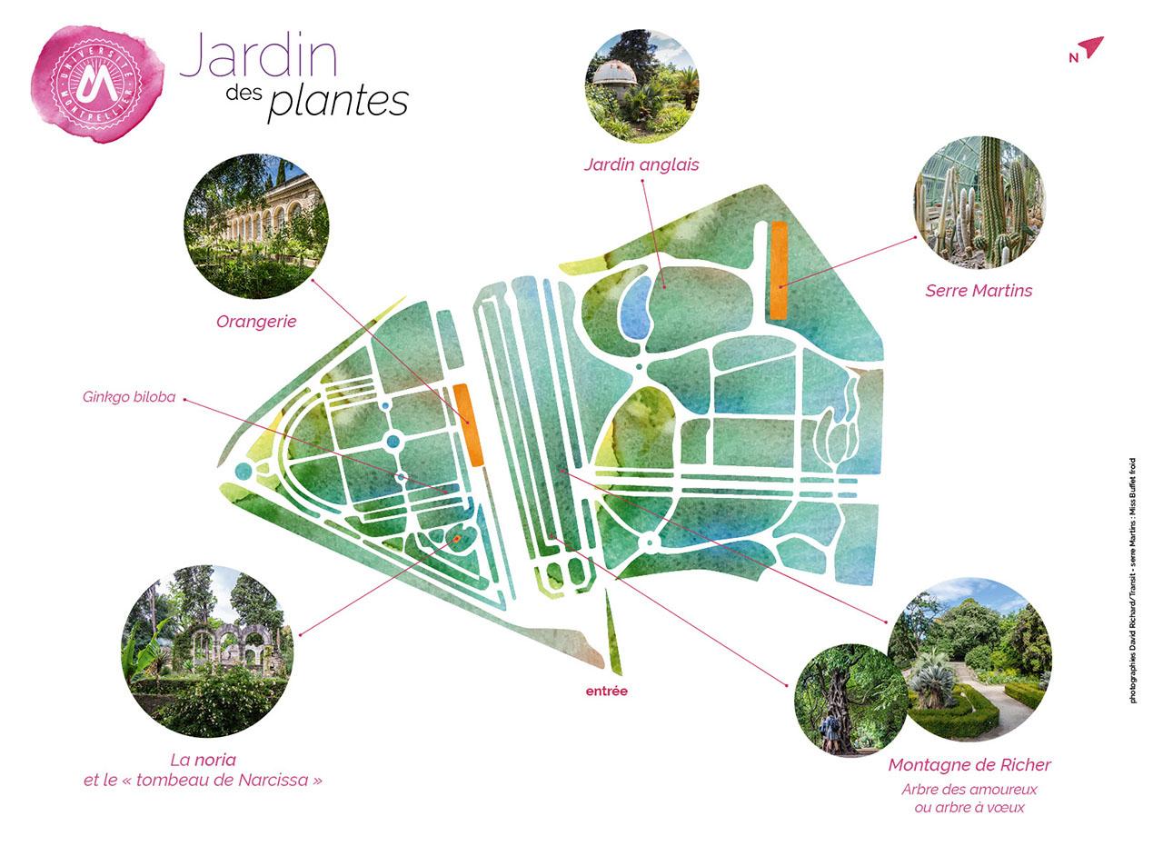 Jardin Des Plantes – Université De Montpellier serapportantà Jardin Botanique Emploi