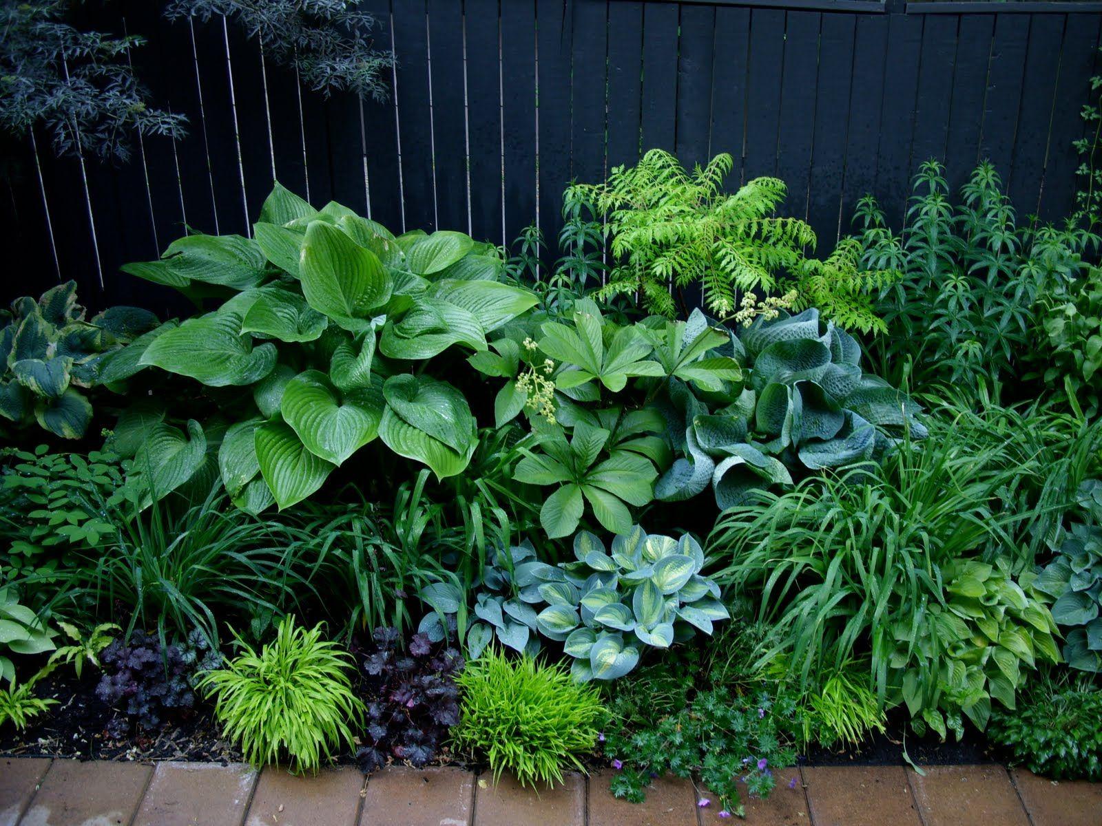 Jardin D'ombre | Jardin D'ombre, Jardins Et Idées Jardin destiné Plante Jardin Ombre