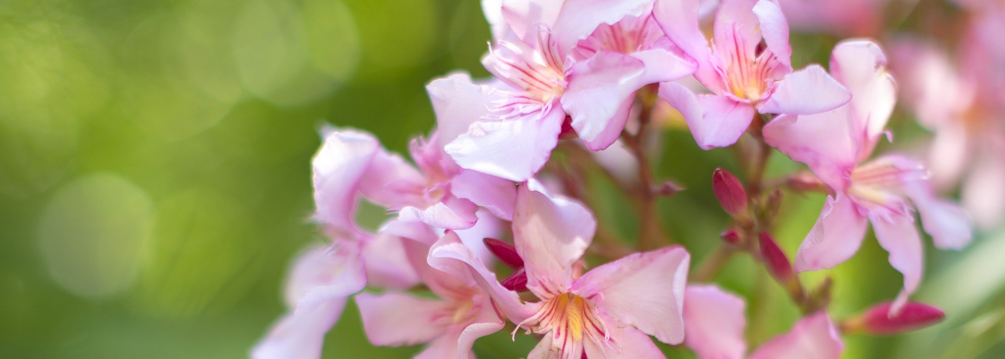 Jardin D'ornement : Botanic®, Arbustes Pour Haie Et Arbres D ... avec Arbustes Decoration Jardin