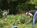 Jardin. Du Bonheur De Jardiner, En 2020 Lancez-Vous ! dedans Abonnement L Ami Des Jardins