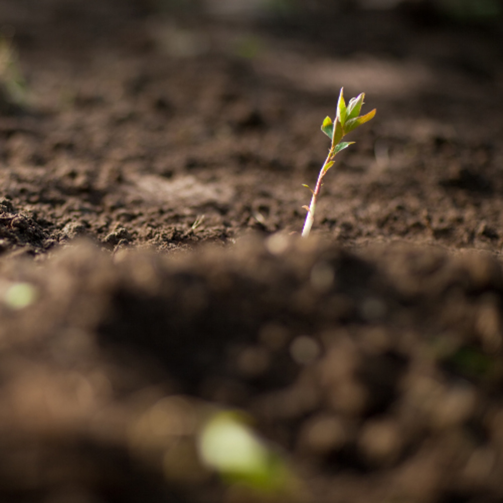 Jardin Écologique : Il Vous Fait Gagner 200 € Par An ! - Ooreka pour Bonne Terre Pour Jardin