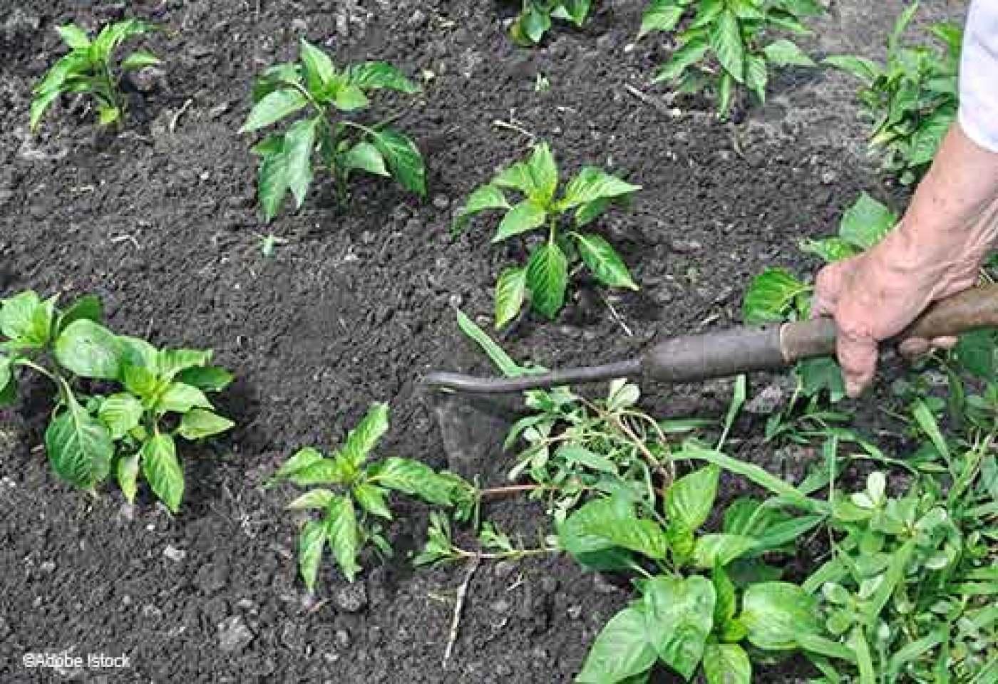 Jardin: En Finir Avec Les Mauvaises Herbes! dedans Bache Mauvaise Herbe Jardin