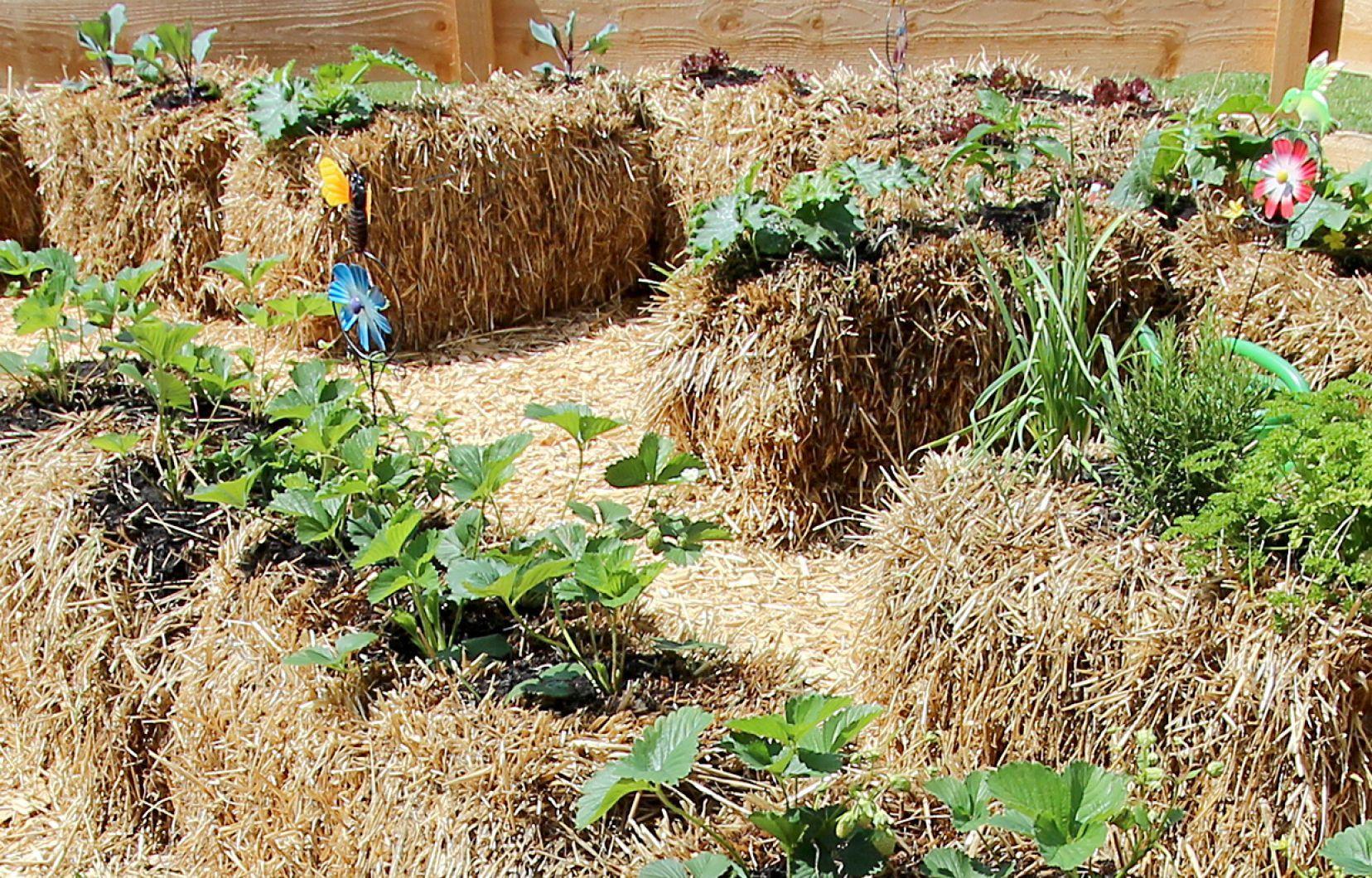 Jardin: La Culture Sur Botte De Paille | Le Devoir pour Botte De Jardin