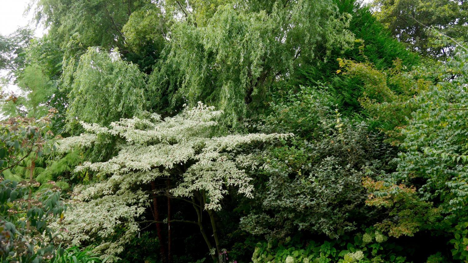 Jardin. Le Jardin Des Sables, Dans La Drôme pour Arbre Pour Petit Jardin