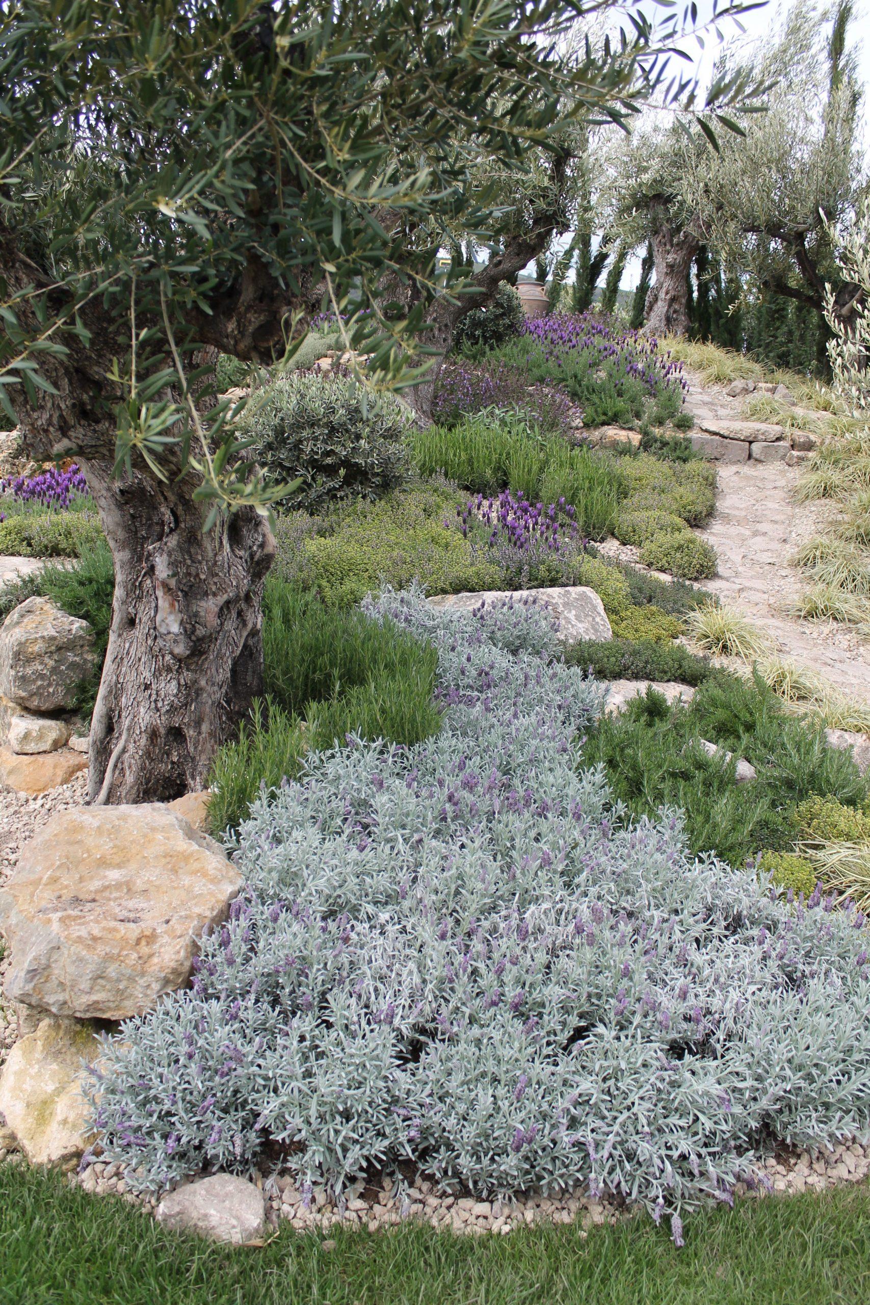 Jardin Méditerranéen Mêle Des Plantes À Feuillages Gris ... destiné Amenagement Jardin Exterieur Mediterraneen