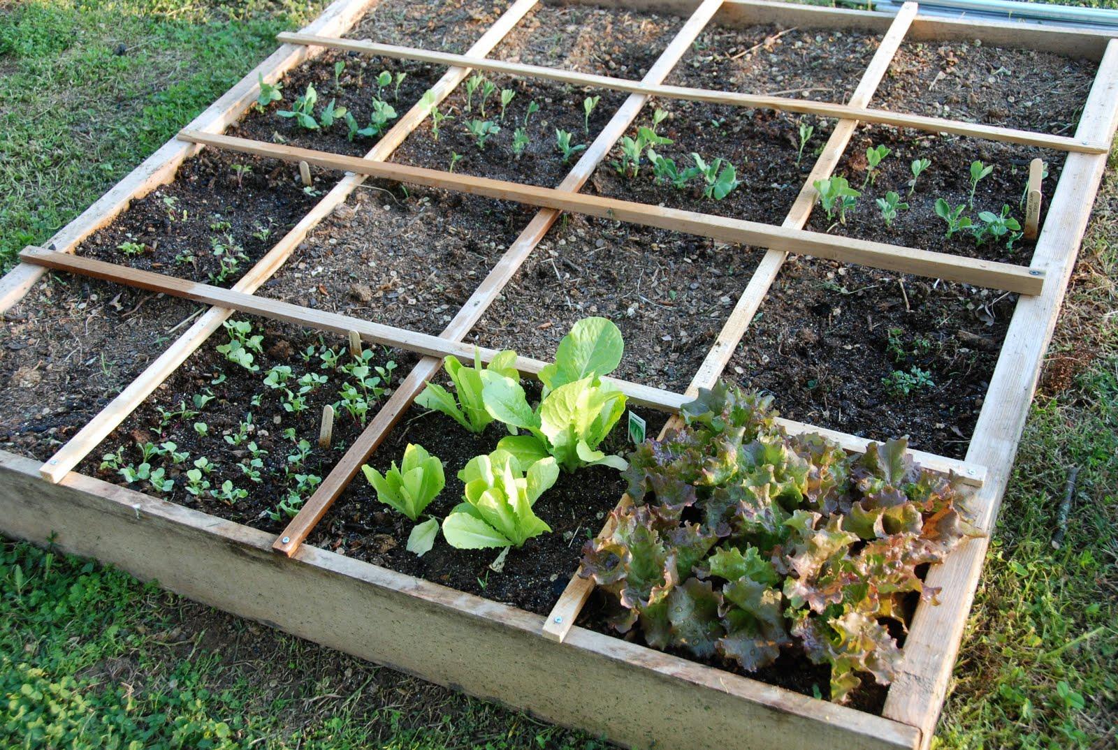 Jardin Ou Potager En Carré4 - Le Blog De Doug tout Jardin Au Carré