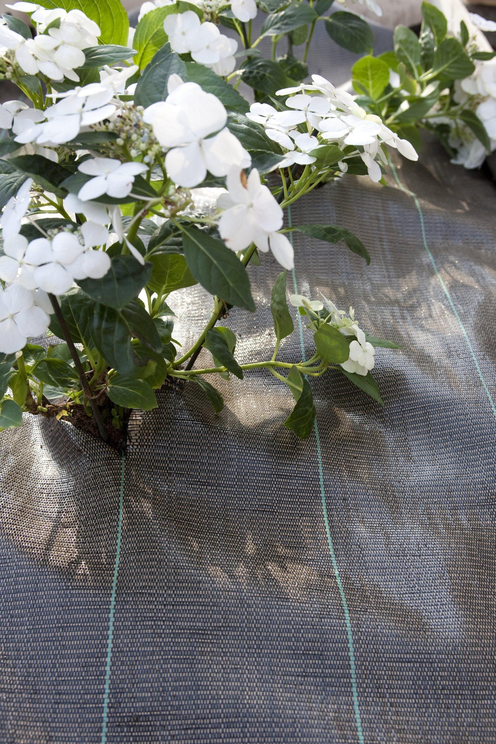 Jardin Protection Des Plantes Et Lutte Contre Les Nuisibles ... destiné Bache Mauvaise Herbe Jardin