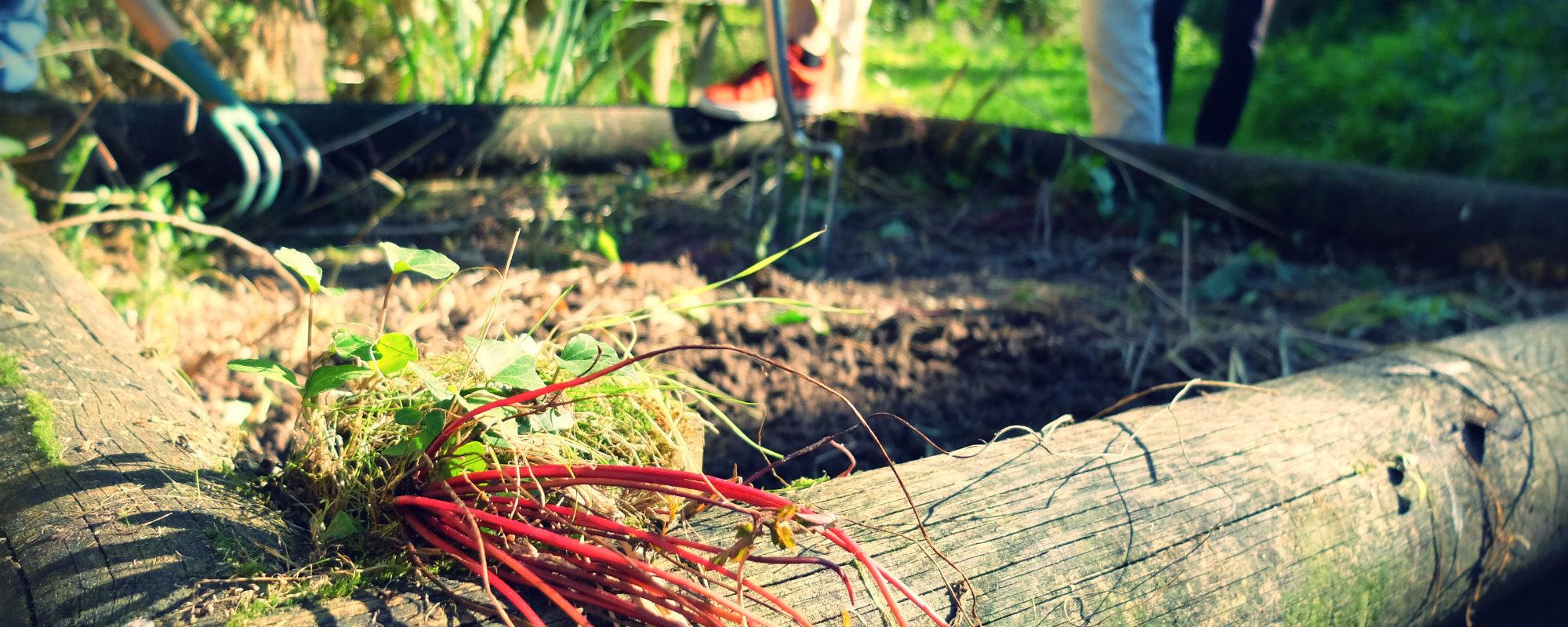 Jardiner Pour Les Nuls : Préparer La Terre Pour L'hiver encequiconcerne Jardiner Pour Les Nuls