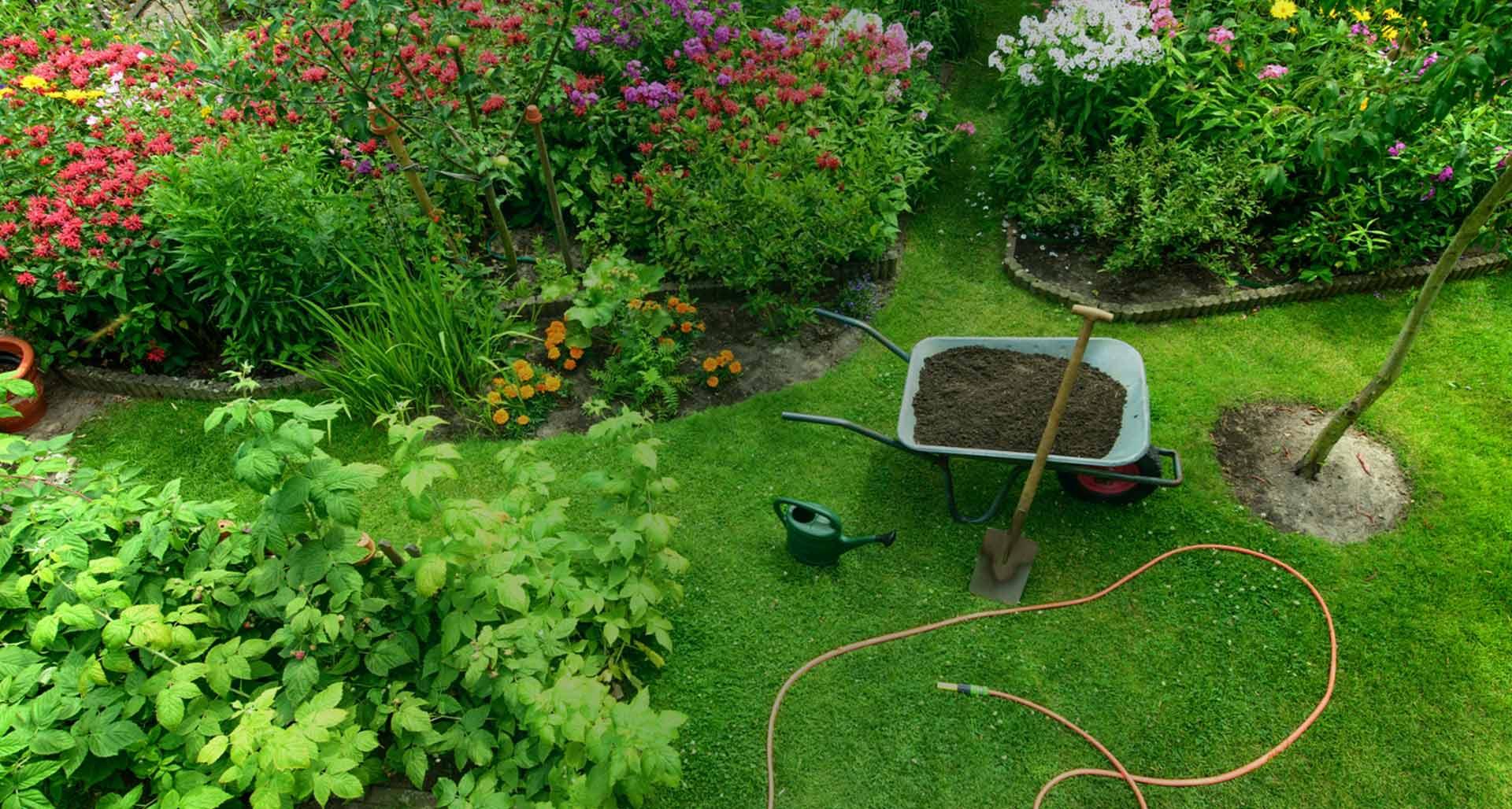 Jardineries Truffaut : Spécialiste Jardin, Animaux, Maison ... à Arbustes Decoration Jardin