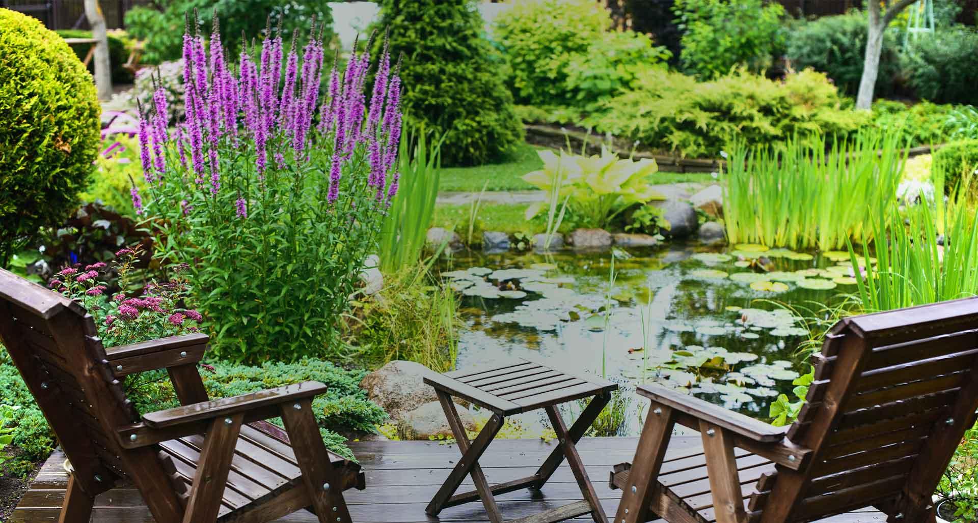 Jardineries Truffaut : Spécialiste Jardin, Animaux, Maison ... dedans Plante Bassin De Jardin