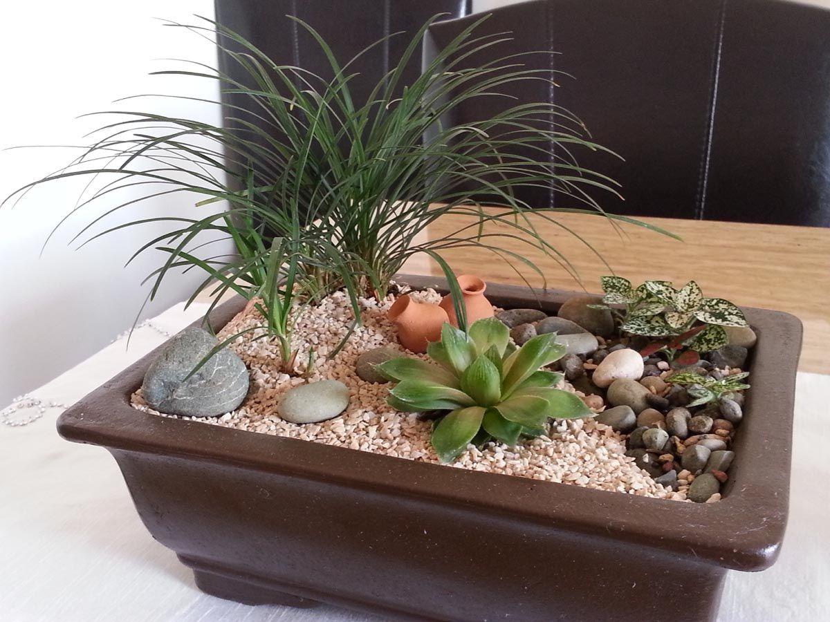 Jardines Pequeños Formatos   Pellizcados   Jardines ... destiné Jardin Cactus Miniature