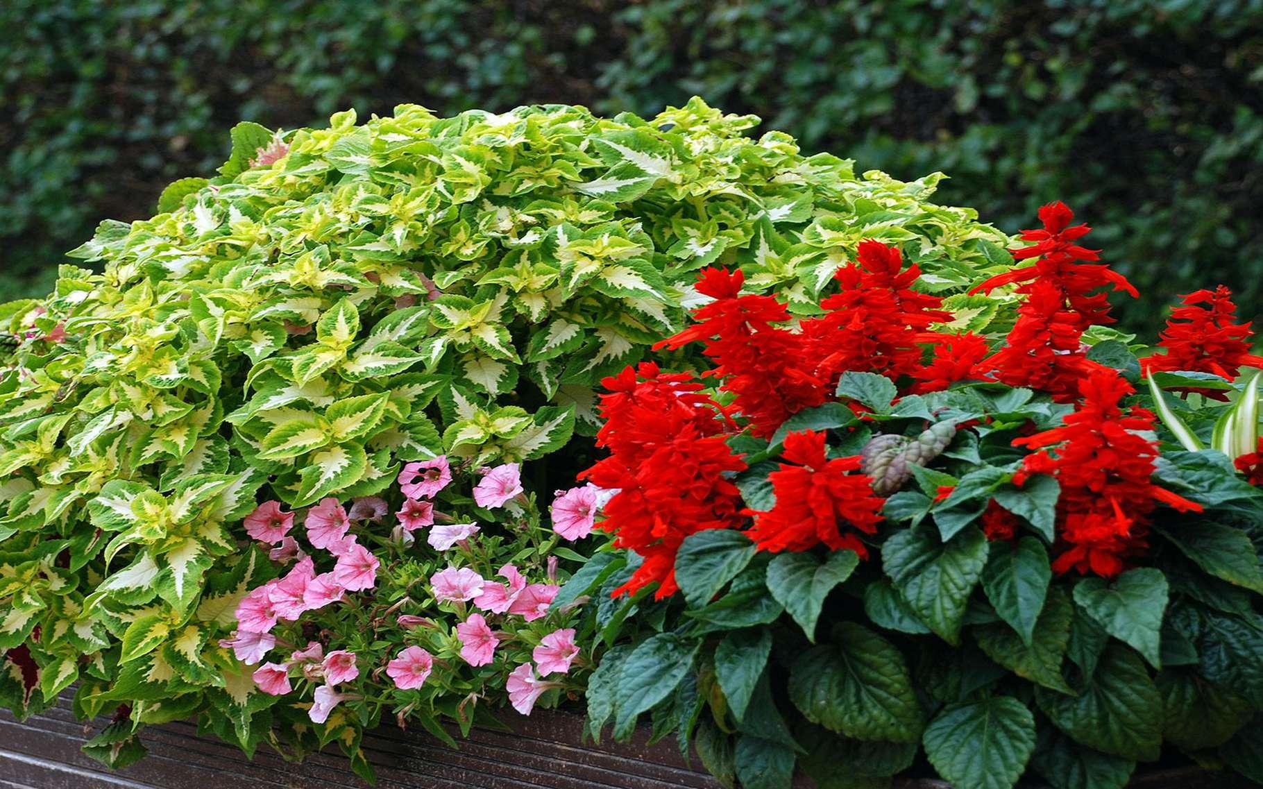 Jardinière : Quatre Saisons De Plantes | Dossier destiné Jardinieres Beton Pour Jardin