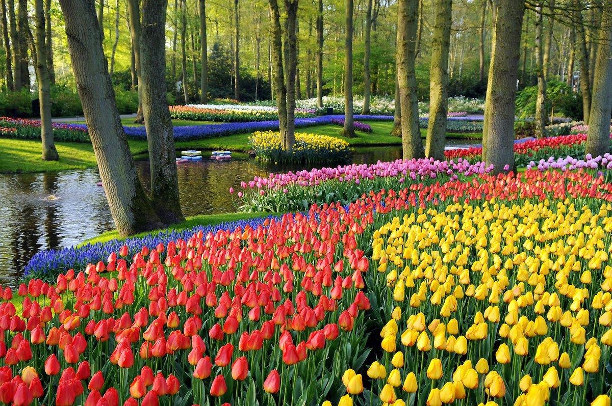 "Jardins De Babylone On Twitter: ""the Most #beautiful Spring ... dedans Jardin De Keukenhof"