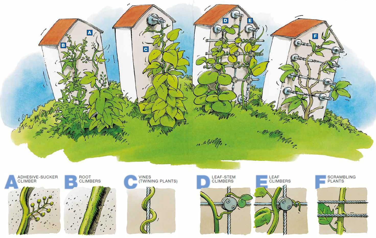 Jardins Verticaux Dans Appartements Et Maisons Pour 33+ ... concernant Organisation D Un Jardin Potager