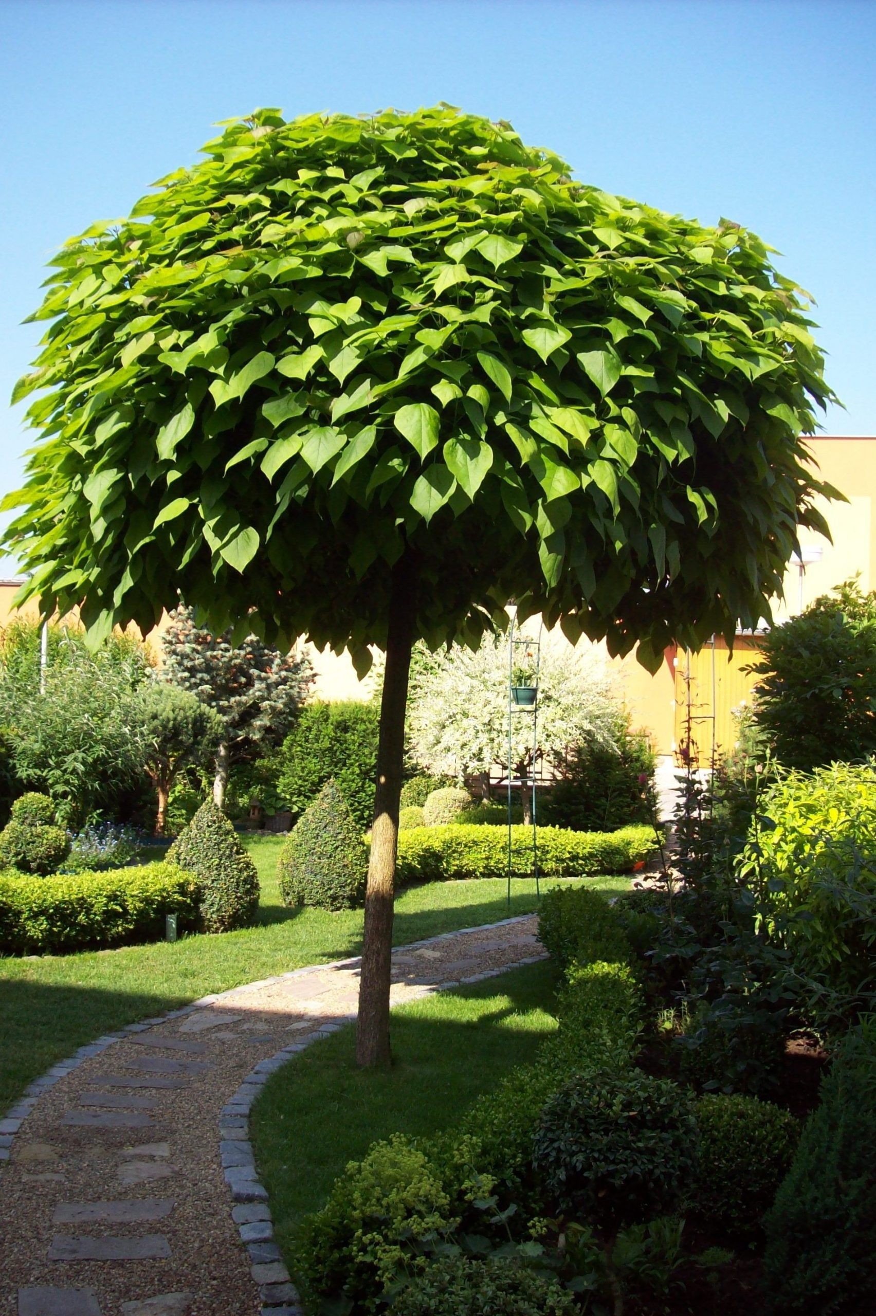 Katalpa | Arbres Pour Petit Jardin, Idées Jardin Et ... encequiconcerne Arbre Pour Petit Jardin