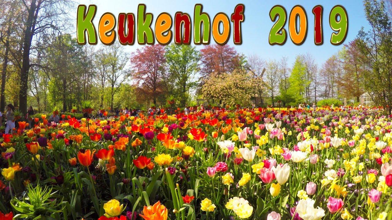 Keukenhof 2019. Full Hd. Keukenhof Is The Garden Of Europe. concernant Jardin De Keukenhof