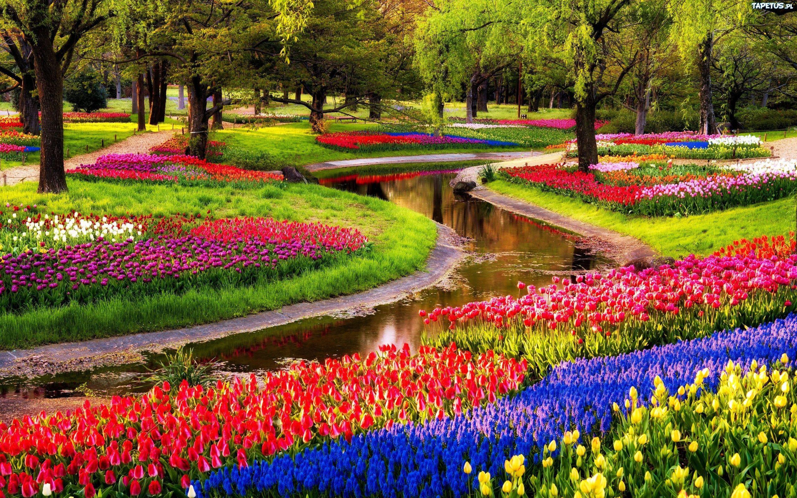 Keukenhof Gardens If You're Traveling From Late March To Mid ... pour Jardin De Keukenhof