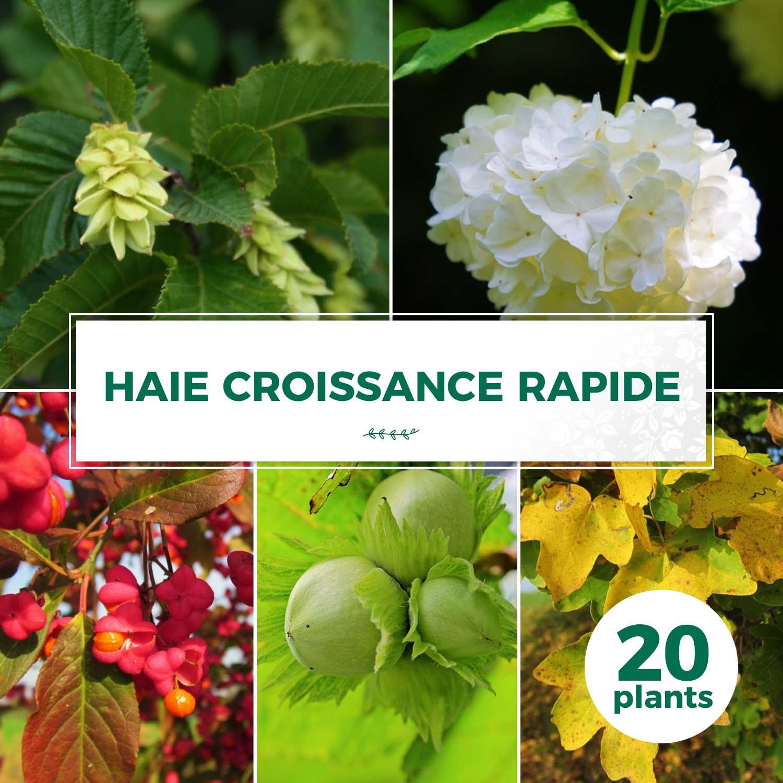 Kit Haie Croissance Rapide | Haie En Kit - 20 Plantes ... concernant Haie De Jardin Pousse Rapide