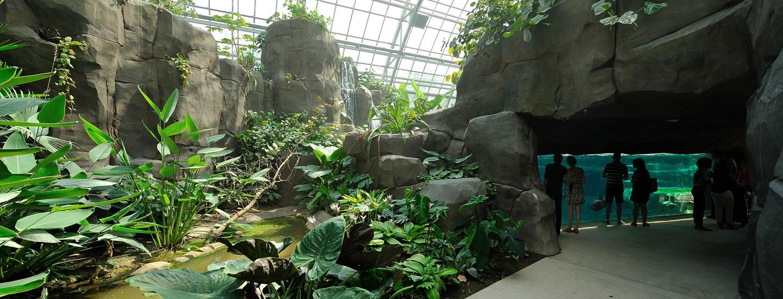La Biozone Amazonie-Guyane | Parc Zoologique De Paris dedans Serre De Jardin Amazon