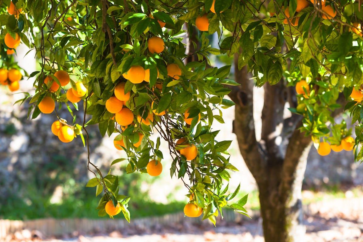 La Chaux Vive, Pour Un Jardin Plus Écologique serapportantà Chaux Vive Au Jardin