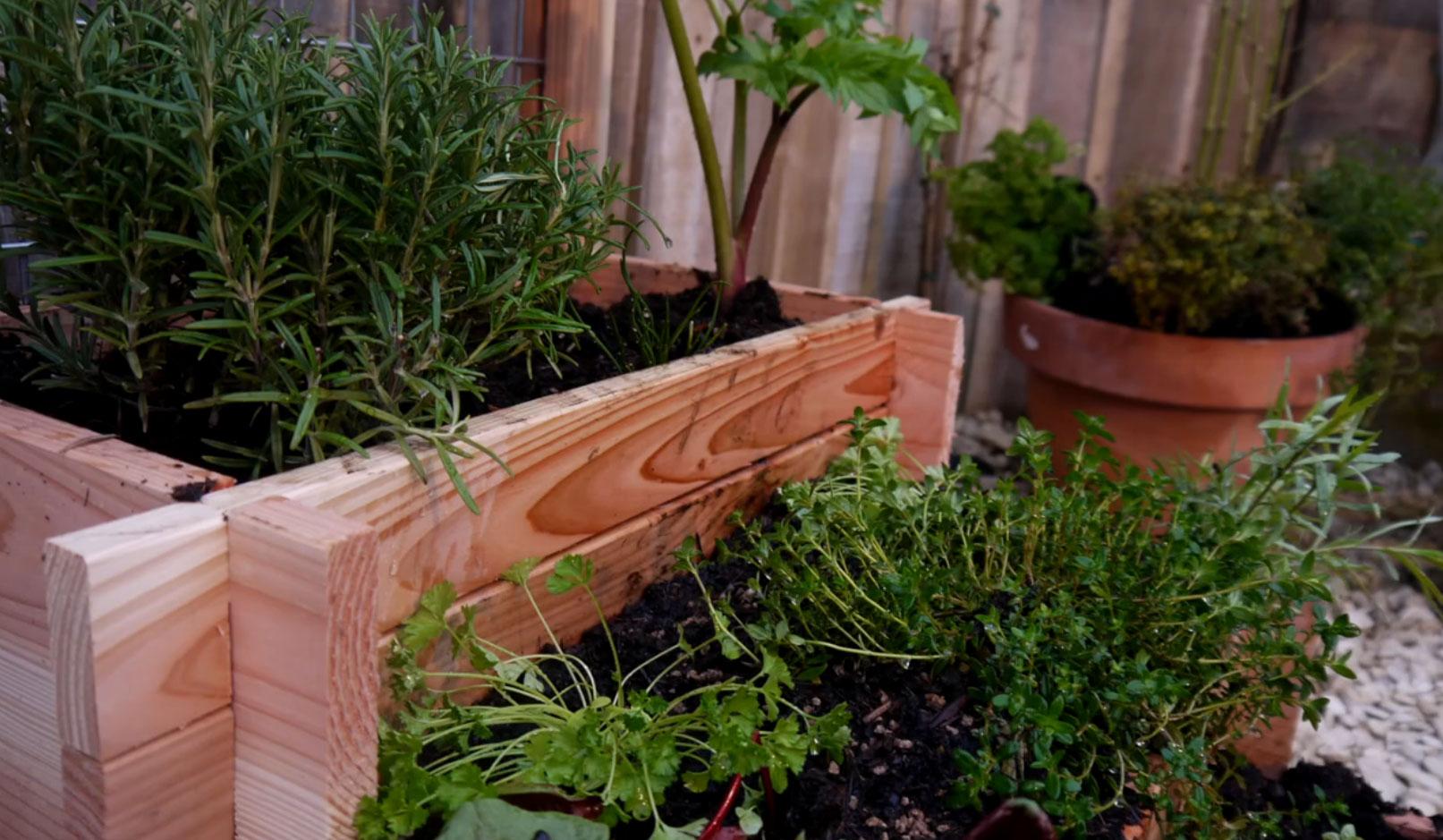La Culture Des Plantes Aromatiques En Pot encequiconcerne Jardin En Pots Potager