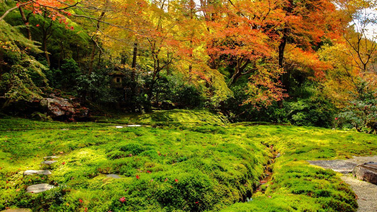 La Passion Japonaise Pour La Mousse Végétale, Une Importance ... destiné Plante Pour Jardin Japonais