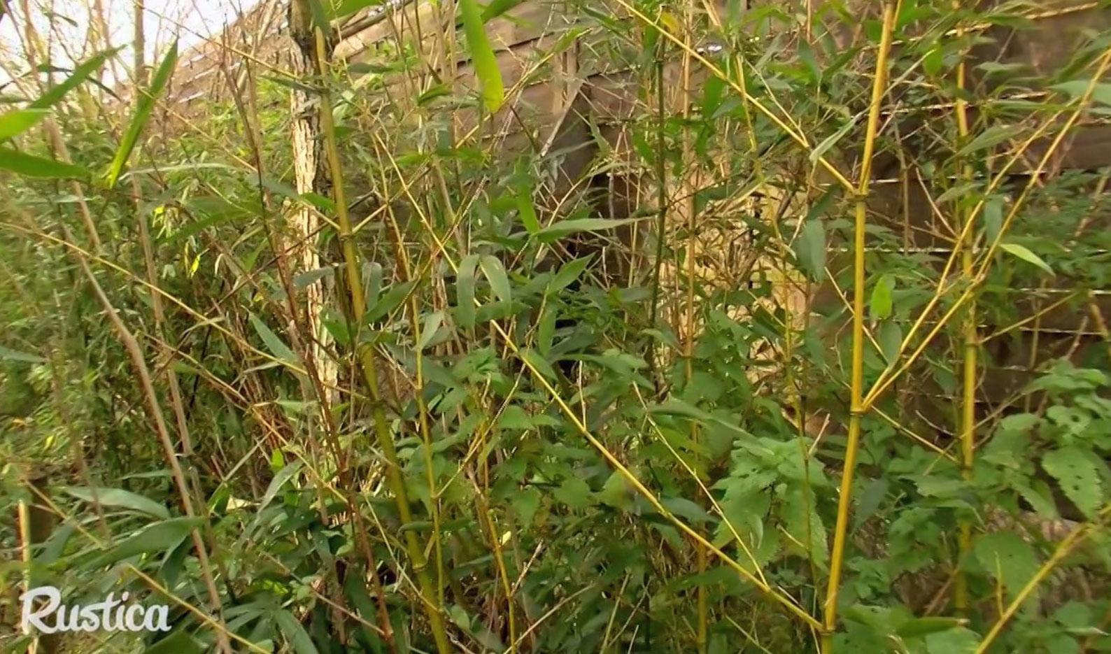 La Plantation D'une Haie De Saule Et Bambou intérieur Haie De Jardin Pousse Rapide