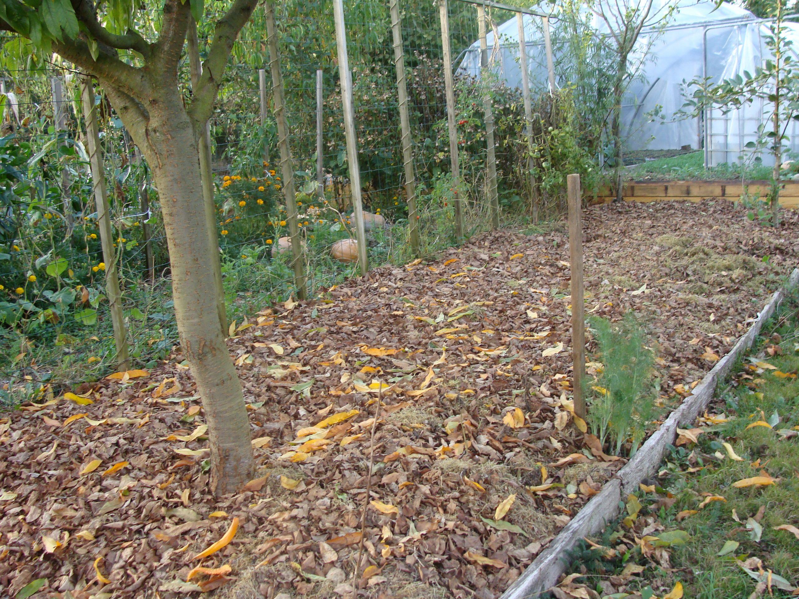L'automne Au Jardin Par Jacques Subra tout La Potasse Au Jardin