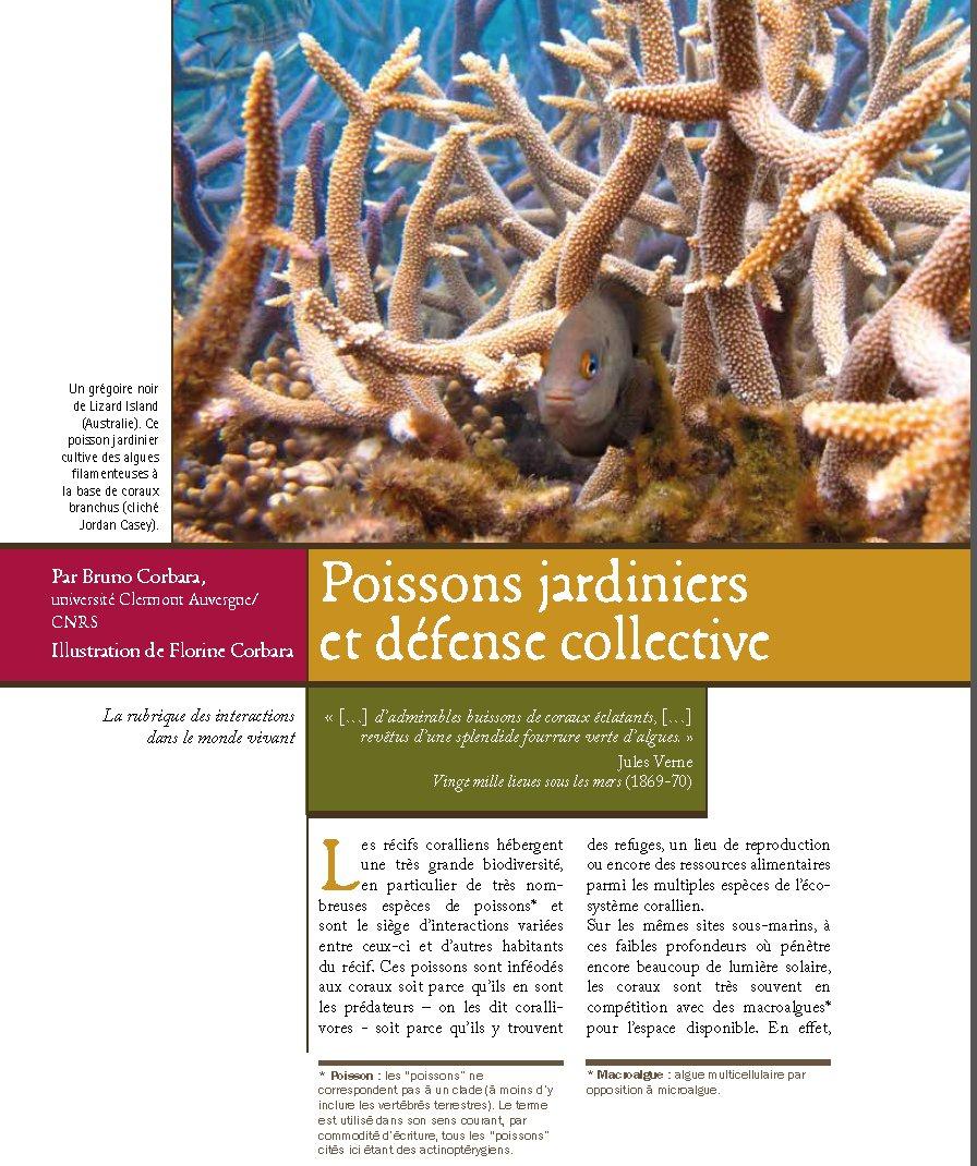 Lavaud Pierre -Mazan (@plavaud_Mazan)   Twitter intérieur Siege Pour Jardiner