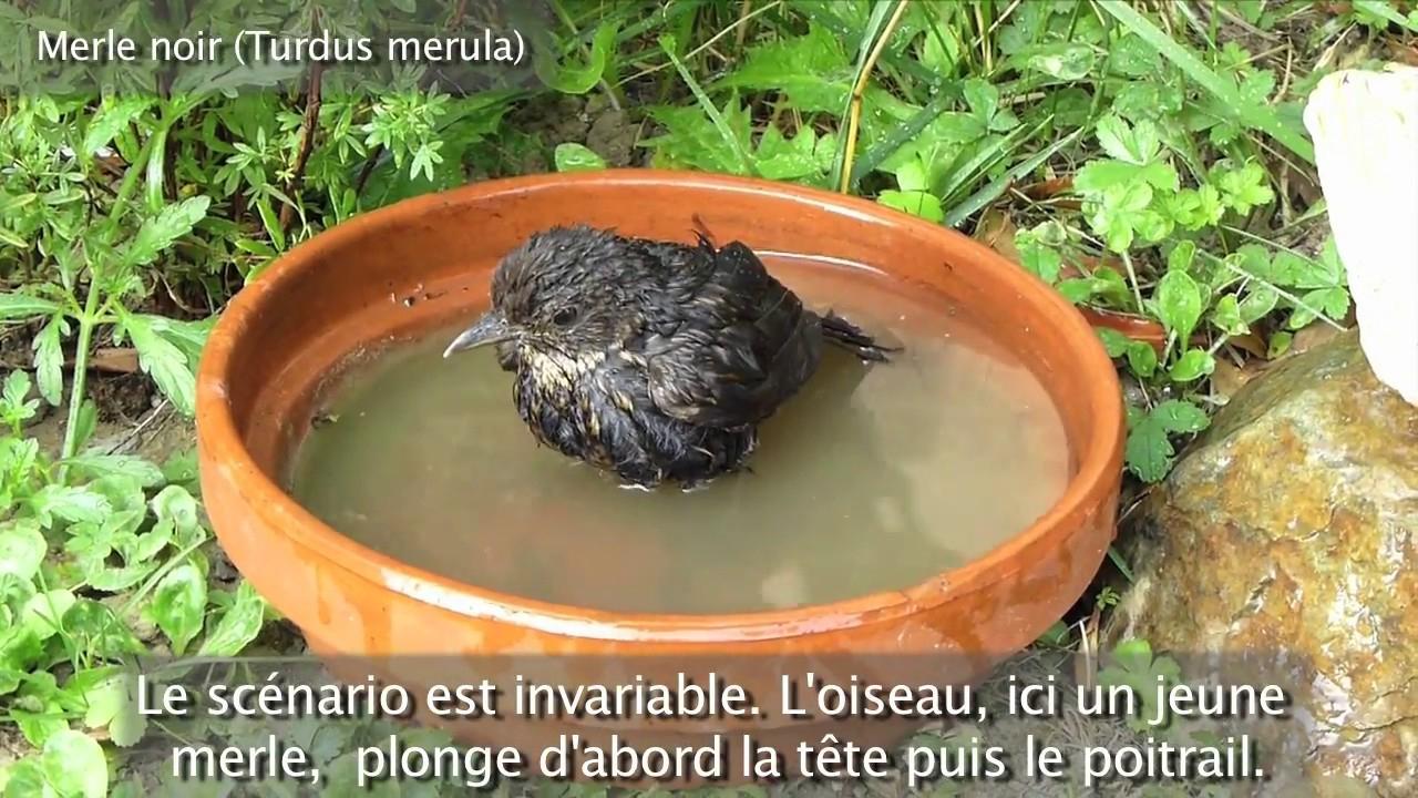 Le Bain Des Oiseaux (Christian Aimar Et Michel Delarue) à Baignoire Oiseaux Jardin