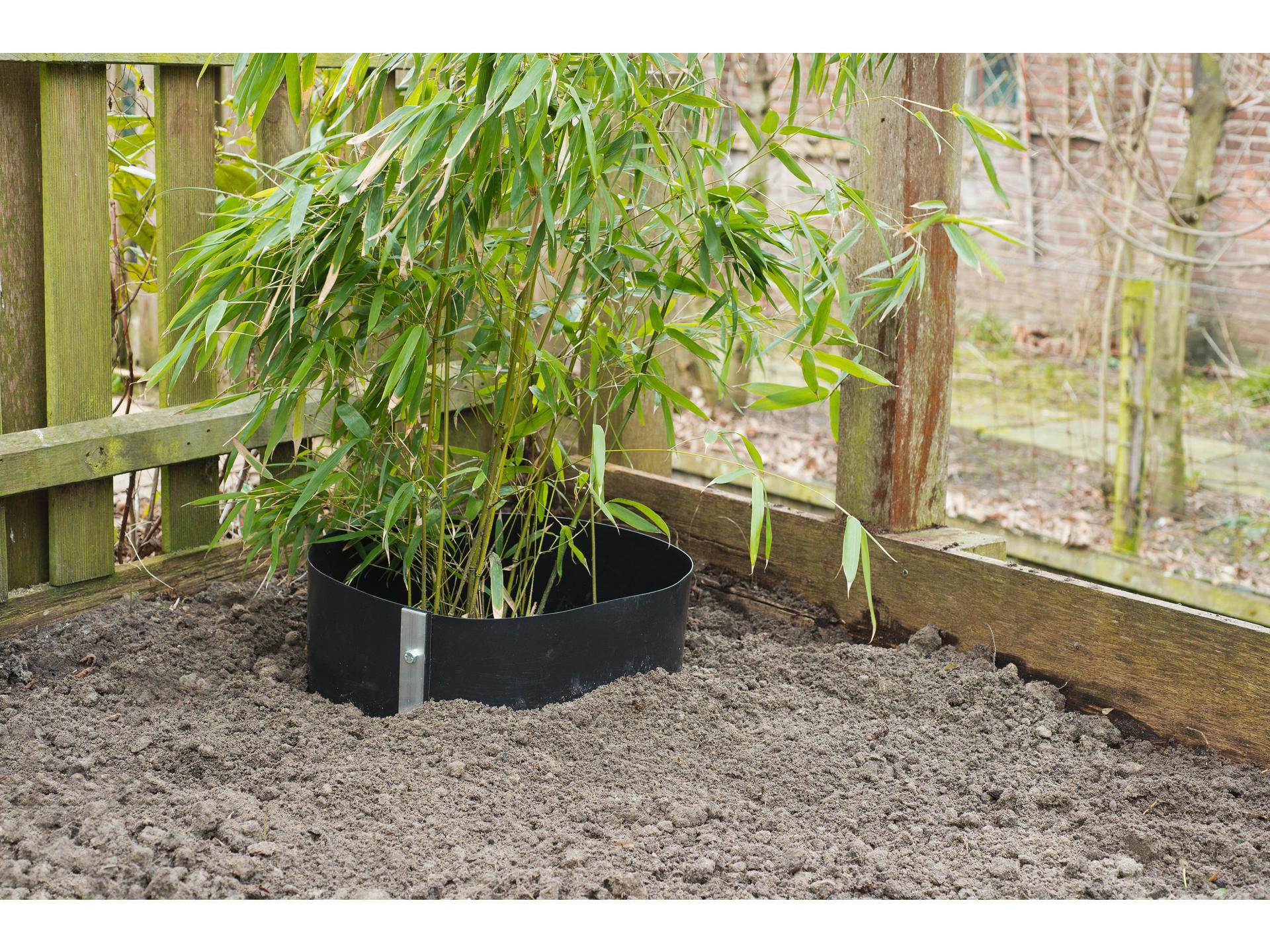 Le Bambou, Une Plante Pas Comme Les Autres, Mais Tellement ... pour Comment Eliminer Les Bambous Dans Un Jardin