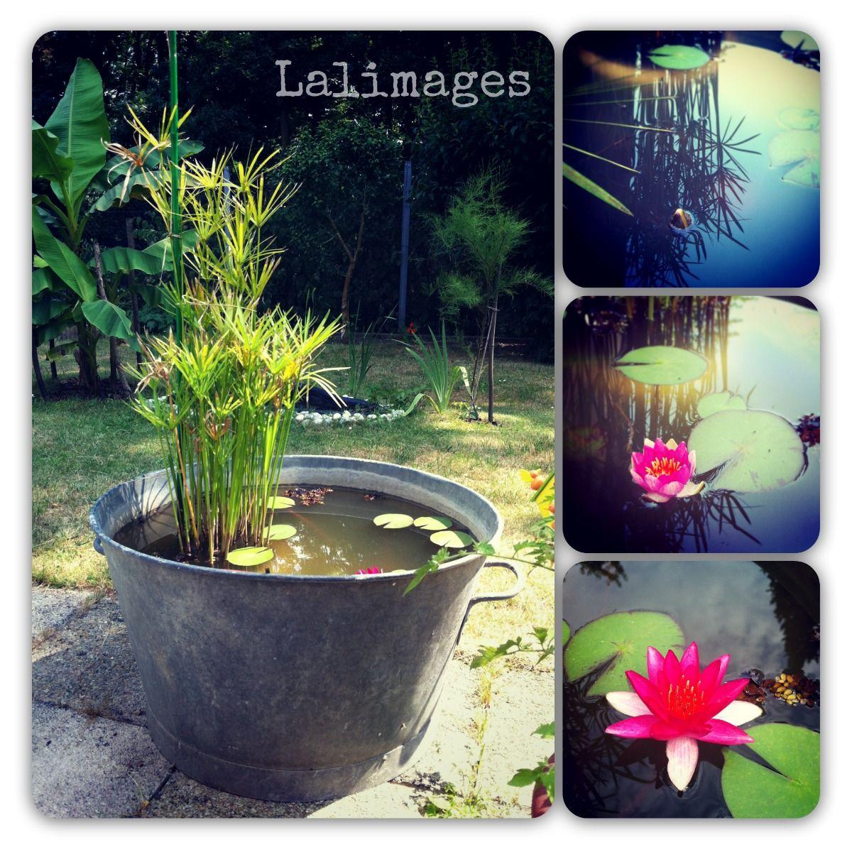 Le Blog De Lali: Ma Pause Et ... Diy, Un Bassin De Jardin ... intérieur Accessoires Pour Bassin De Jardin
