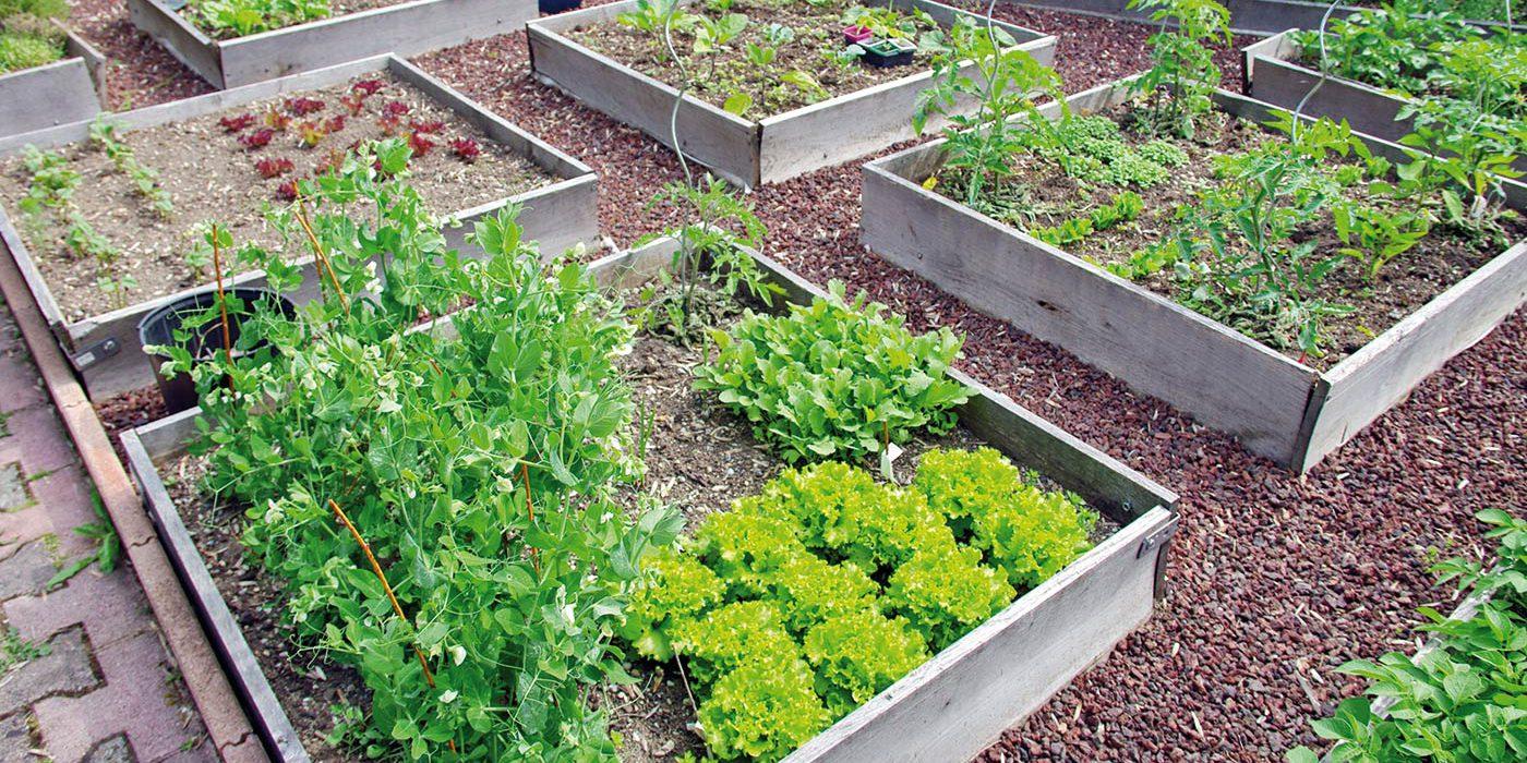 Le Carré Potager : Mini Espace Pour Maxi Rendement dedans Jardin En Carre