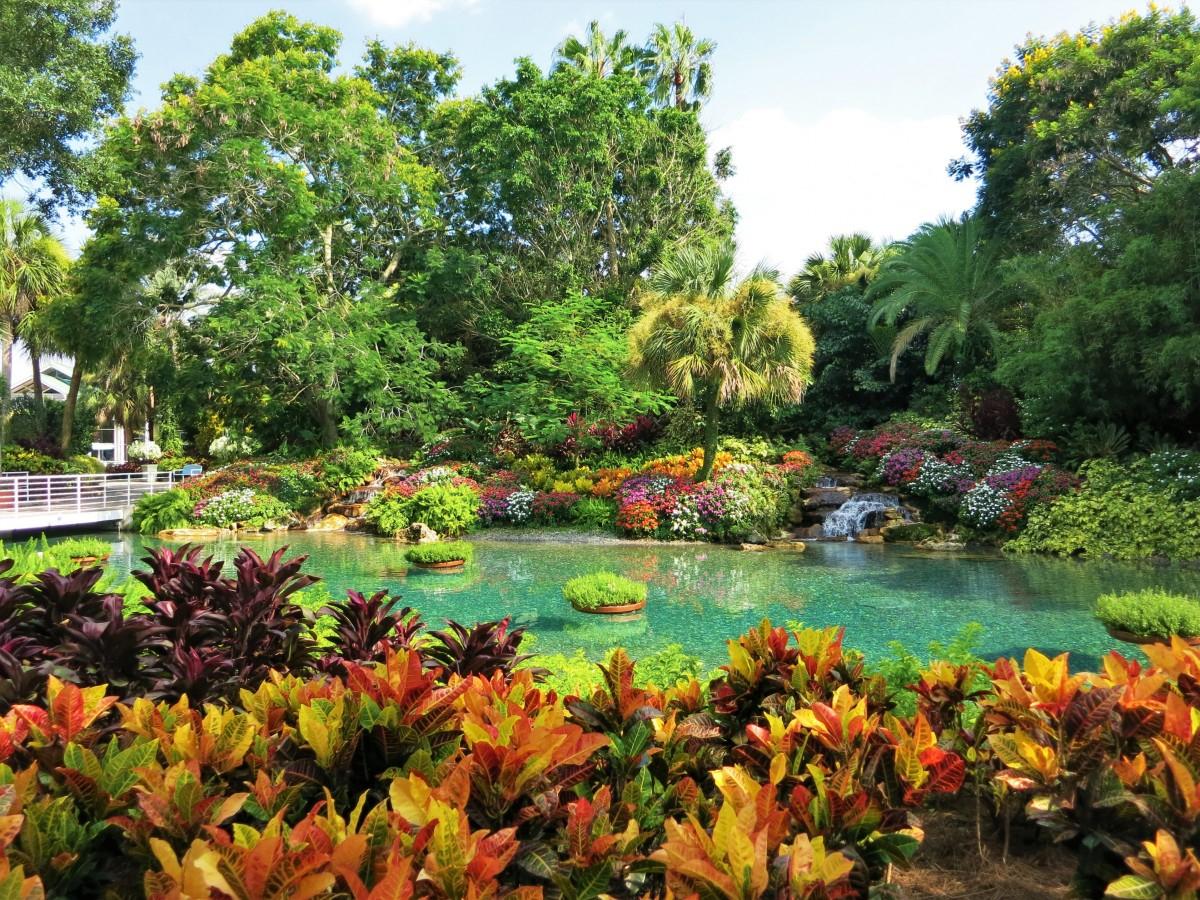 Le Choix Des Plantes Pour Son Bassin De Jardin tout Plante Bassin De Jardin